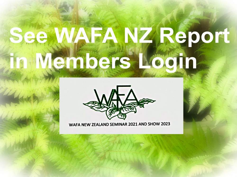 President's WAFA NZ Message